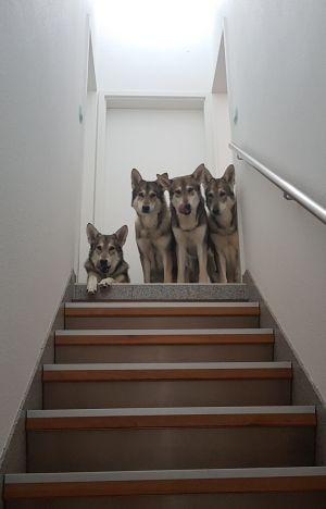 fremde hunde aneinander gewöhnen